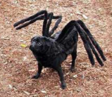Spider-Dog-Costume