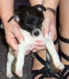 Baby Mabel