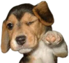 winking dog