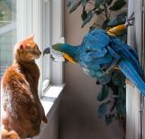 parrot-and-cat