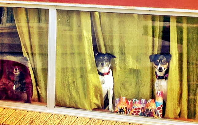 doggies-at-the-window